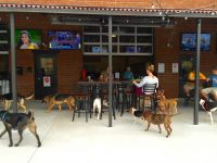 lucky dog bar and brew.jpg