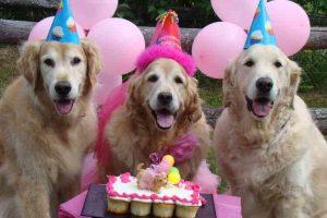 35th Anniversary Pawty (in Dog Years) w/ Simplified @ Lucky Dog Bark & Brew LKN   Cornelius   North Carolina   United States